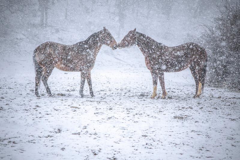 Snowstorm Horses