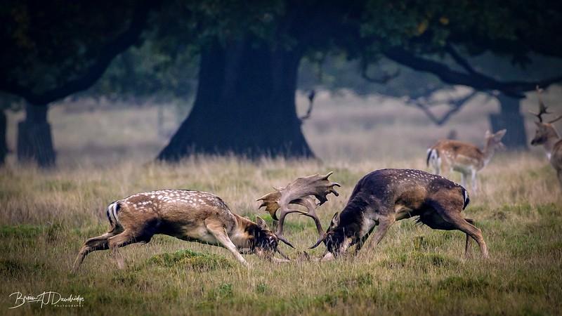 Petworth Deer Park-3981-Edit.jpg