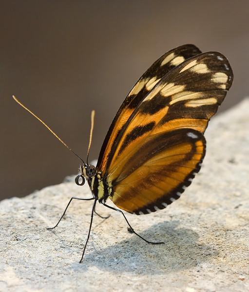 butterfly-5_3800786555_o.jpg