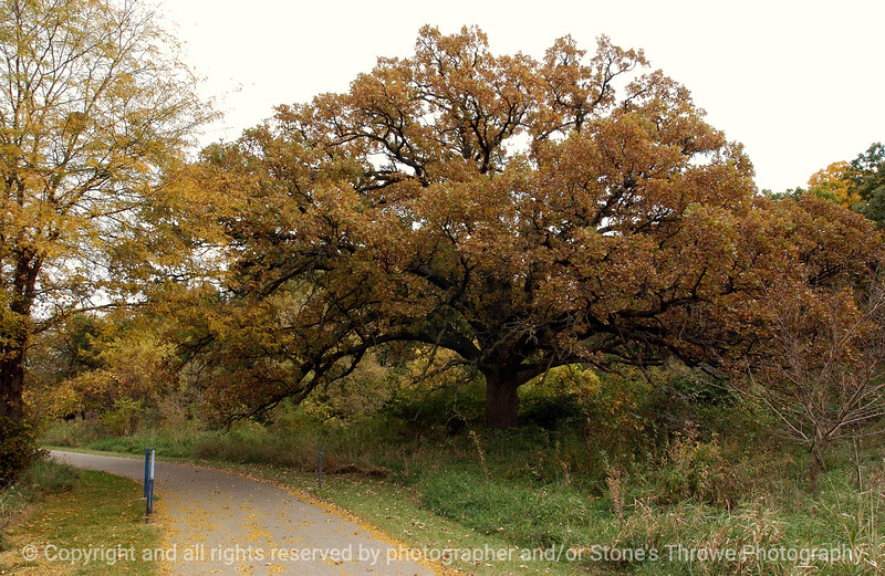015-tree_to-wdsm-12oct04-5714