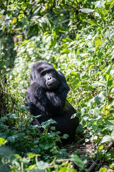 Uganda_T_Gor-770.jpg