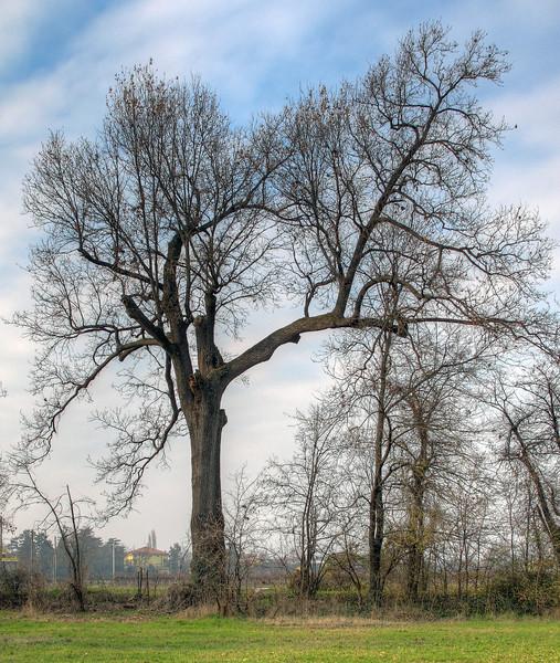 Tree - Fellegara, Scandiano, Reggio Emilia, Italy - December 12, 2010