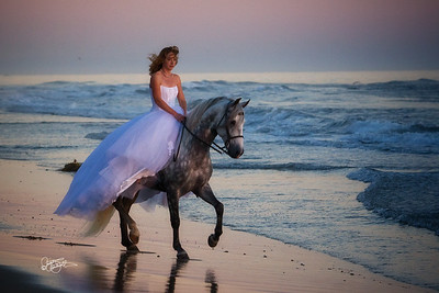 Other Equine Images