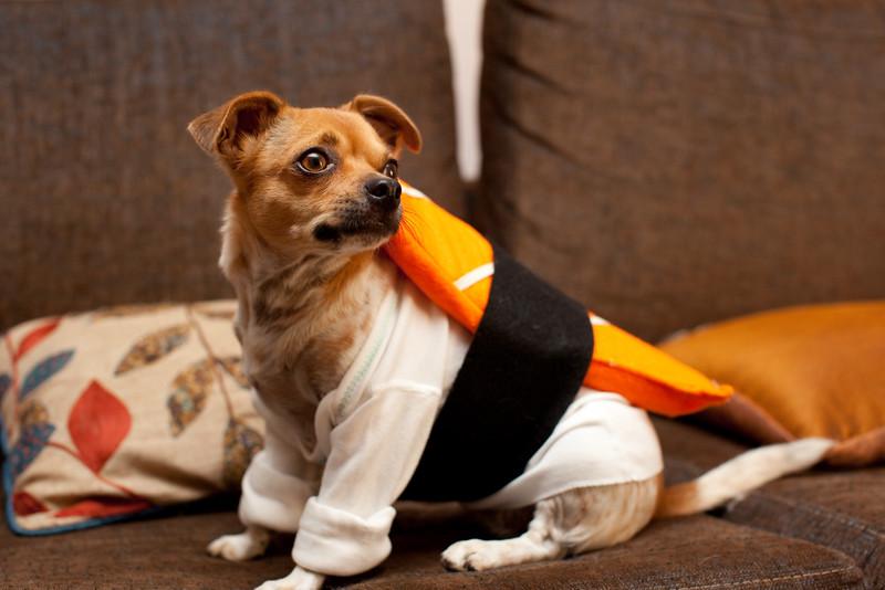 Dog-sushi-halloween-33.jpg