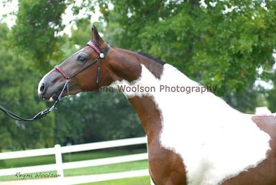 Alexander McQueen Saddlebred