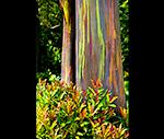 Painted Eucalyptus PRINT.jpg