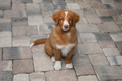 Joy's Pup