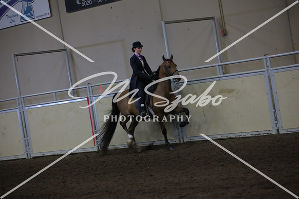 Morgan Classic Pleasure Saddle Jr Rider CHAMPIONSHIP