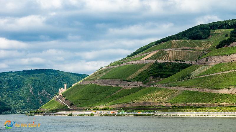 Rhine-Cruising-2015-00548.jpg