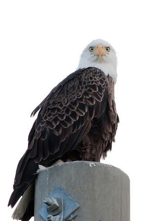 Palm Bay Eagle's Nest Sept 18, 2011