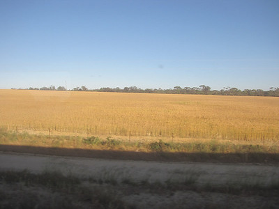 Indian Pacific Train (Sydney to Perth)