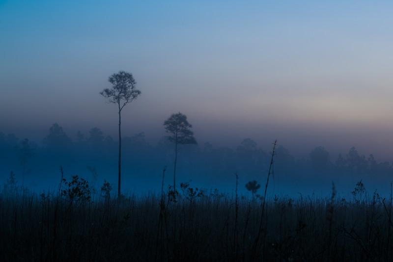 Everglades (36 of 60).jpg
