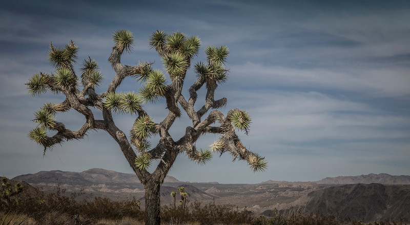 Joshua Tree-6930.jpg