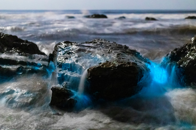 Bioluminescent Tide In San Diego.