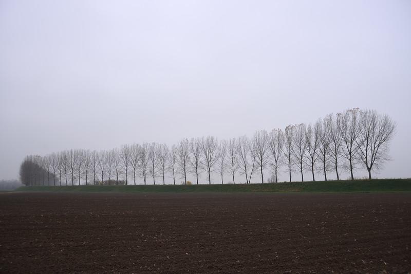 Trees on a Levee - Sant'Agata Bolognese, Bologna, Italy - November 26, 2012