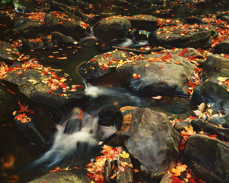 Stream with Rocks and Fallen Leaves