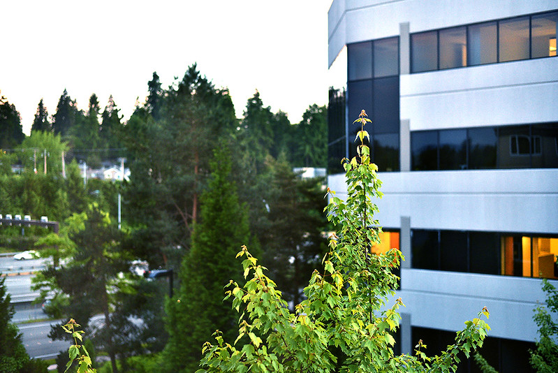 Office amongst trees, Bellevue.JPG