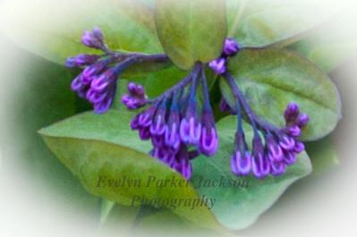 Flower Serenity