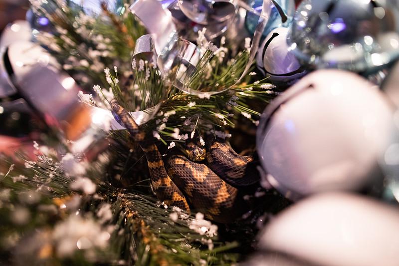ChristmasSnakes19_0004.jpg
