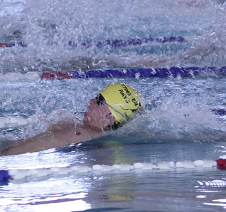 Q Stingray Swimming