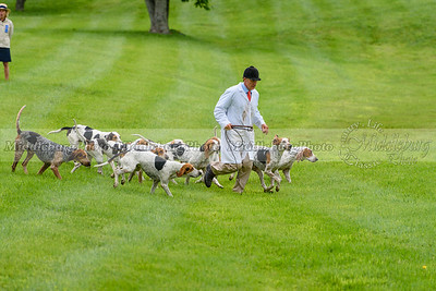 Virginia Hounds Show 2017
