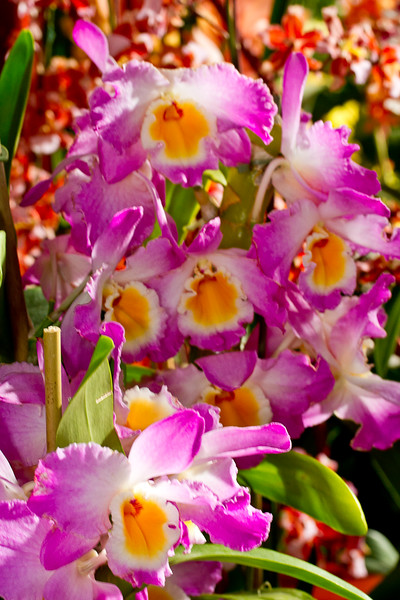 SF_Orchid_Show-37.jpg