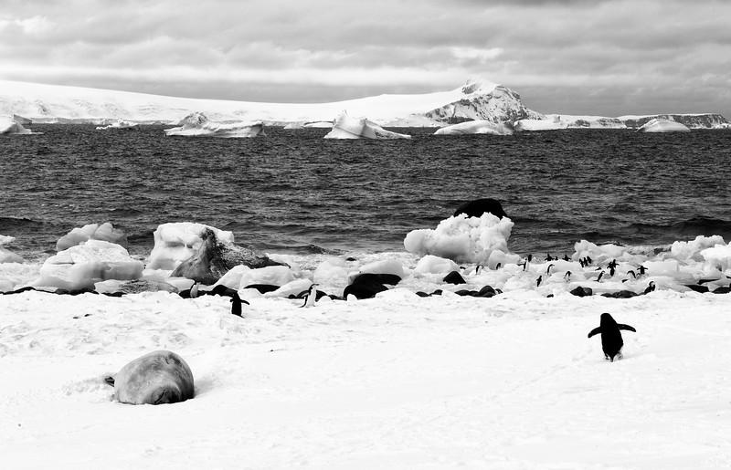 091204_penguin_island_8400a.jpg