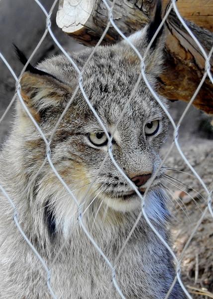 Cheyenne Mtn Zoo 2019 (1194).JPG
