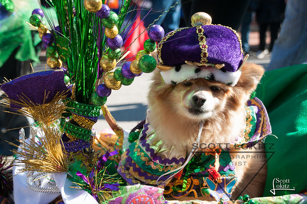 Mardi Gras Pet Parade 2019