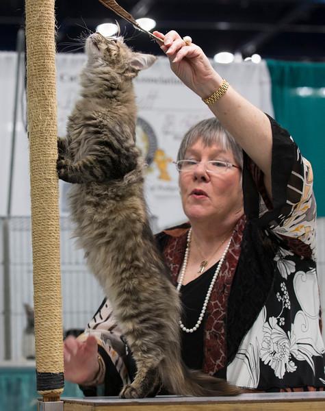 CatShow2014182.jpg