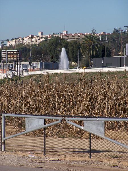 06-01-13_So_Much_Not_Corn-065.jpg