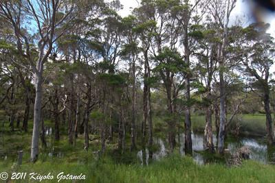 Dundoo Creek