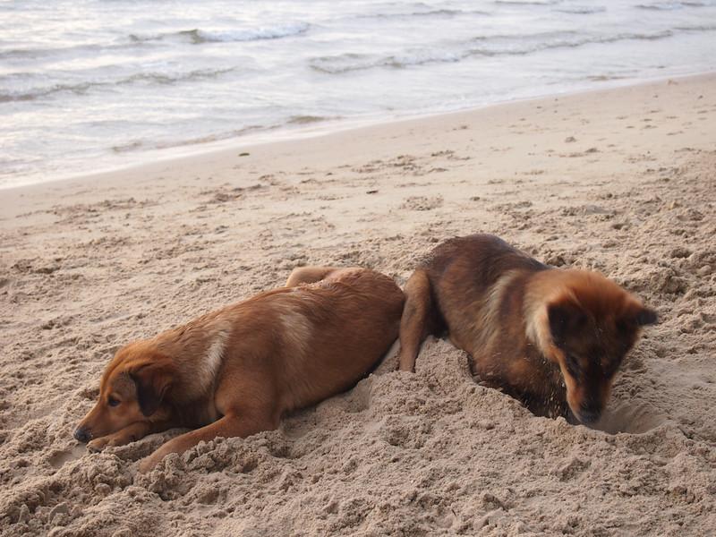 PB133554-beach-dogs.JPG