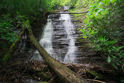 Fall Branch in Swallow Creek WMA