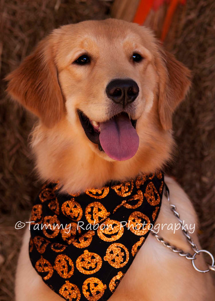 Honey~Barktoberfest 2012