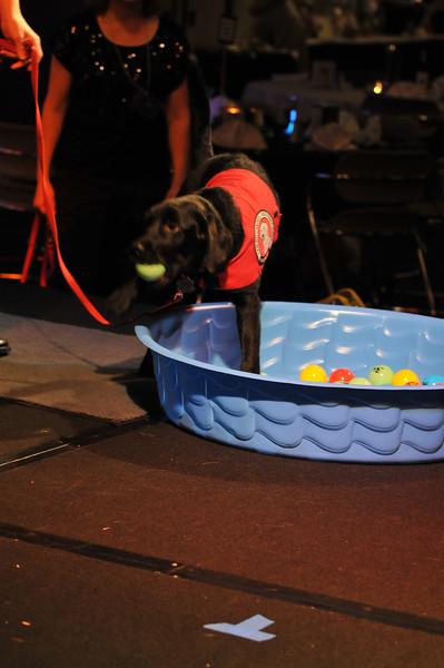 2012-11-10 2012 Fetching Ball 072.JPG