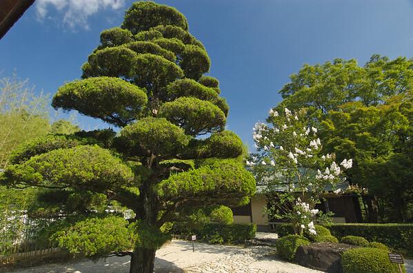 Uraku-En Garden