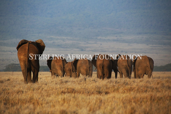 Sterling Africa Foundation Photos