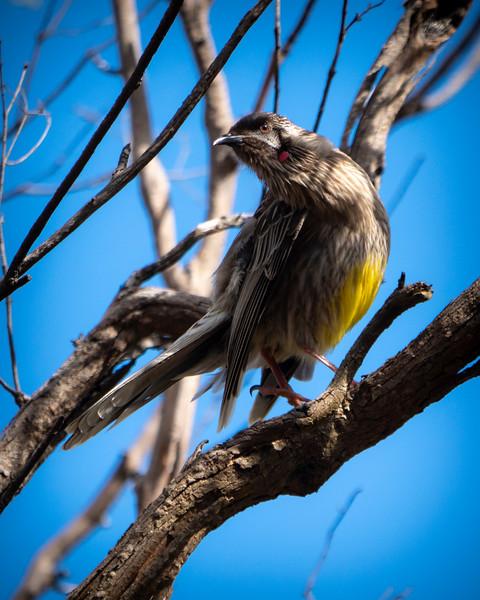 20181010_8202 birds 2478  .JPG