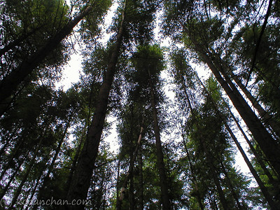 talapus lake trail june 2006