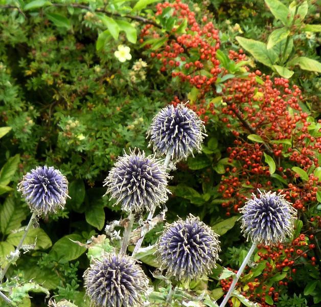 Ballyvaughan flowers2.jpg