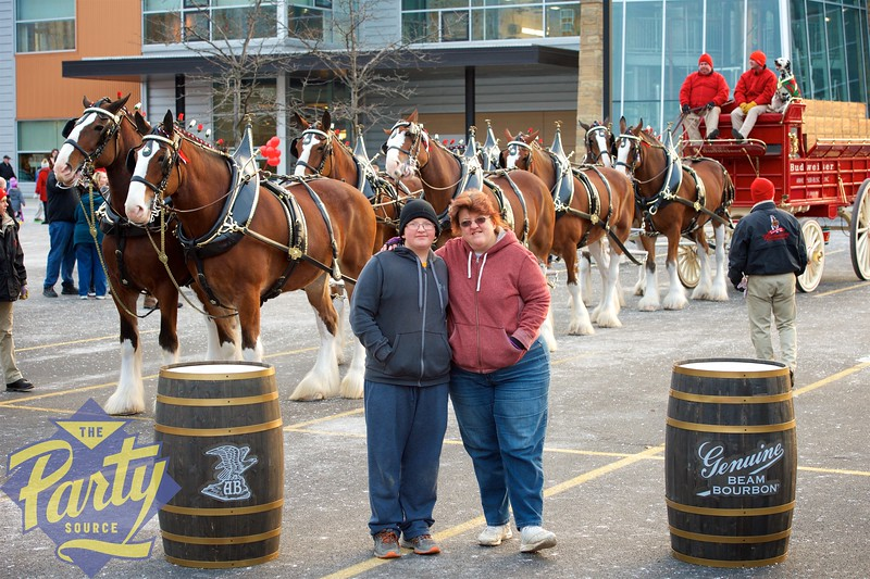 Clydesdale Portraits 111.jpg