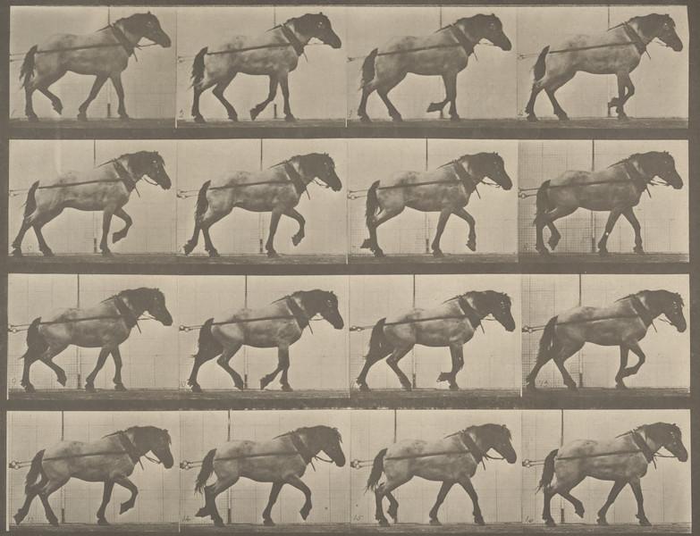 Horse Hansel hauling (Animal Locomotion, 1887, plate 569)