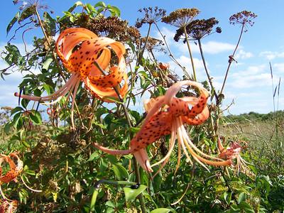 Plant Life on Thacher Island 2010