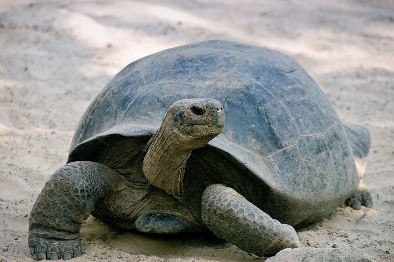 tortoiseside.jpg