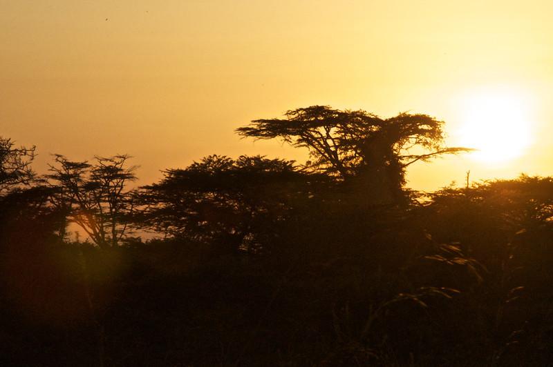 Kenya.Card1.02.2014 516