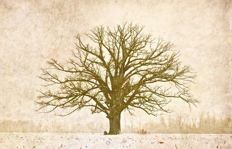 www.dalehlloyd.com    A unique photographic experience.