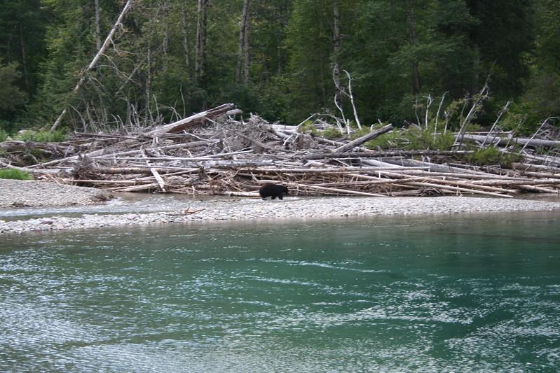 20110827 - 111 - GNP - Black Bear At Swimming Hole Along GTTS Road.JPG