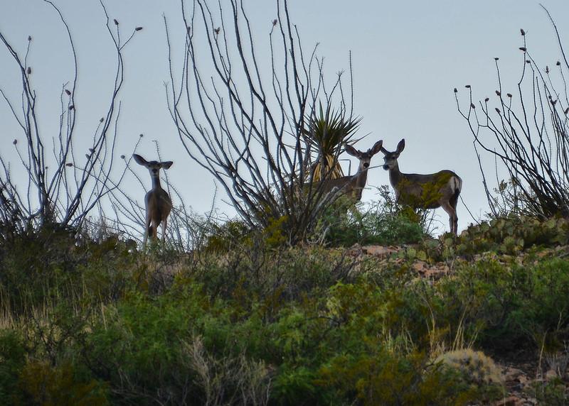 NEA_3113-7x5-Deer.jpg