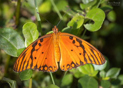 Butterflies and Insects of Bonaire